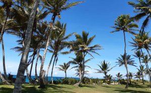 Living The Now in Cabarete Dominican Republic